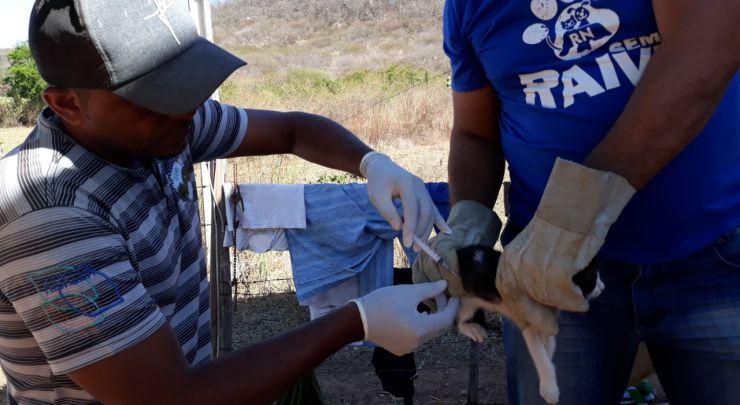 Prefeitura realiza campanha de vacinação antirrábica em cães e gatos