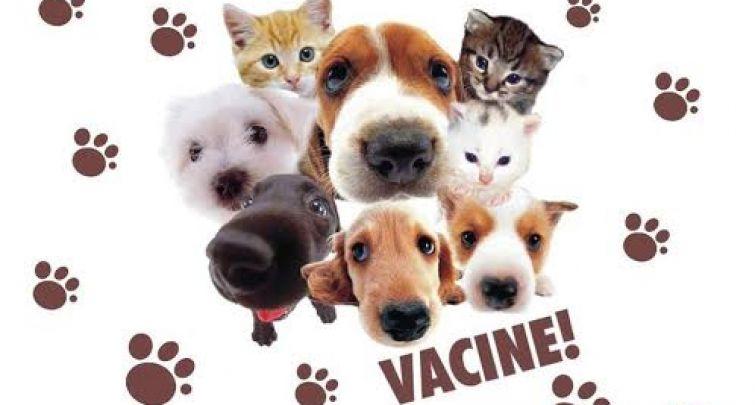 campanha de vacinação antirrábica.